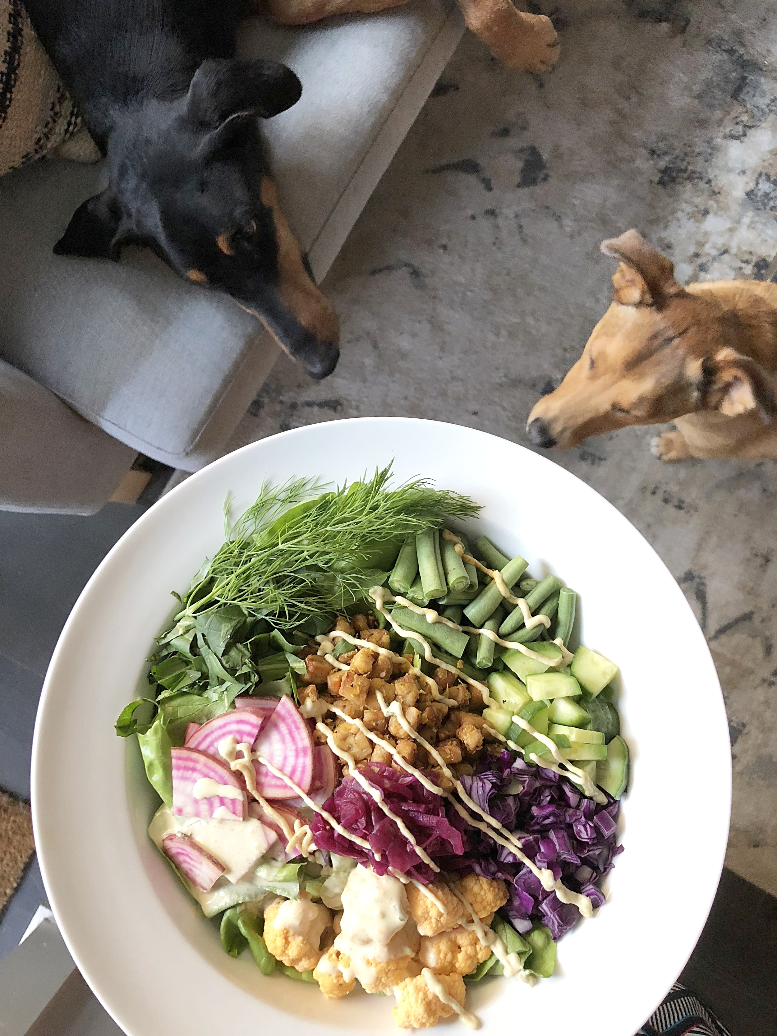 the dogs longing over my salad