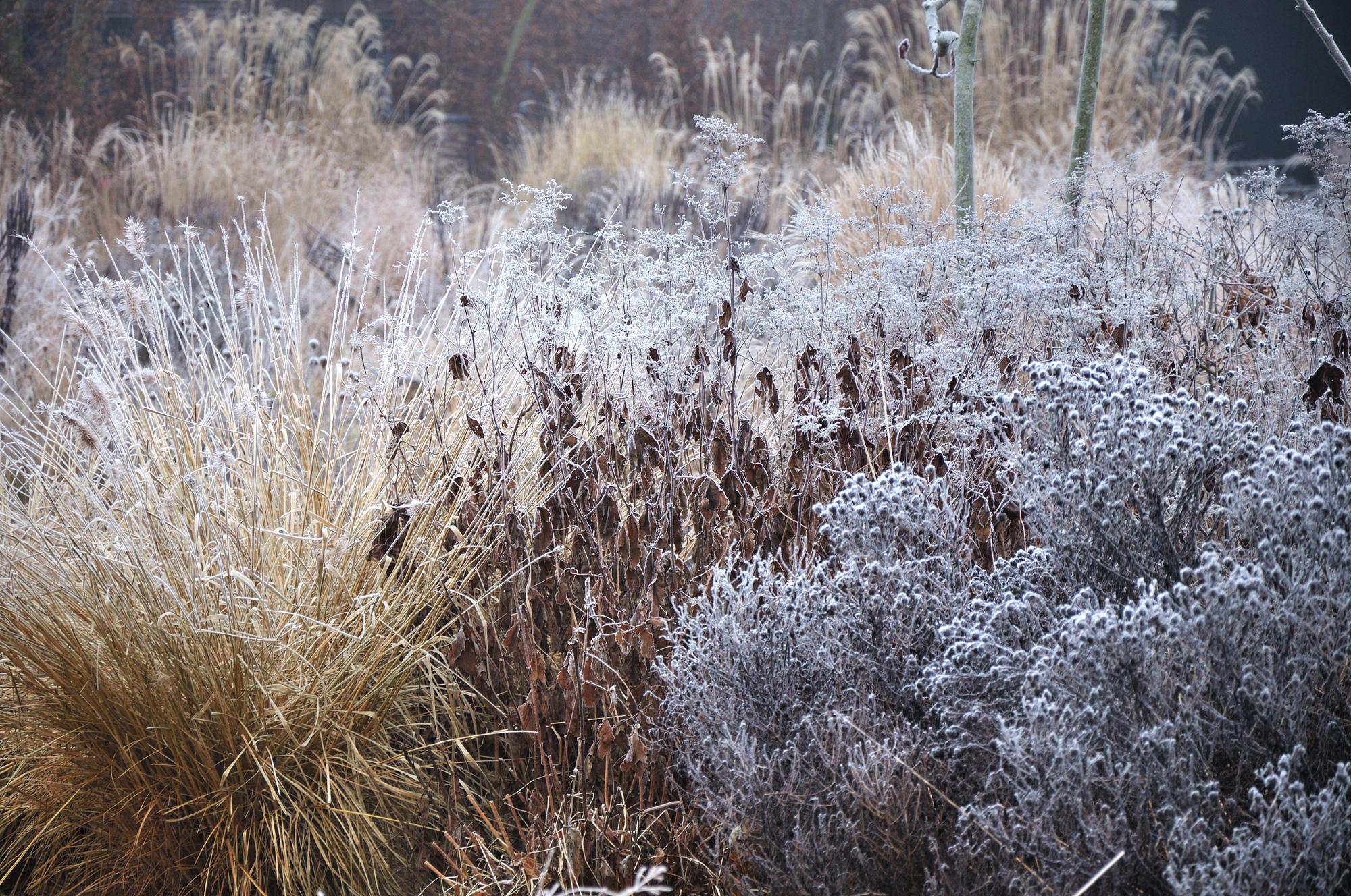 Frank-Heijligers-Dutch-Winter-Garden-Grasses-9.jpg