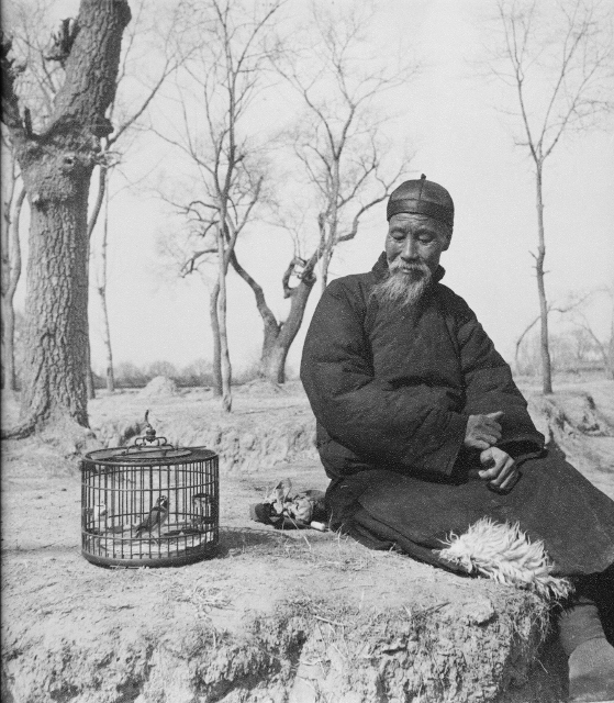 Hedda Hammer Morrisson  – Old man and bird –  circa 1935  Silverprint – 24 x 25.5 cm – stamped on the back, 'Hedda Hammer, Peking'
