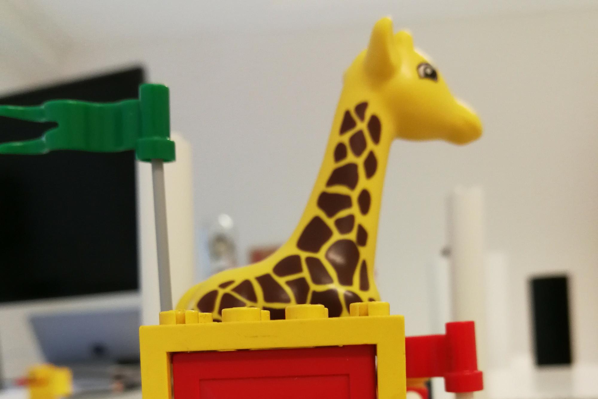 Giraffes! Giraffes everywhere!