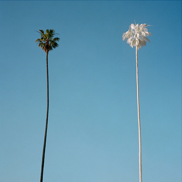 george byrne 2015 white palm.jpg