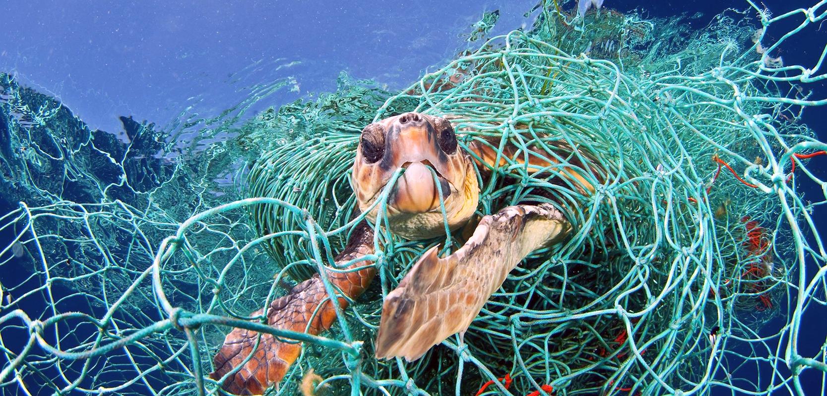 turtle-caught-in-net-e1496755221647 copy.jpg