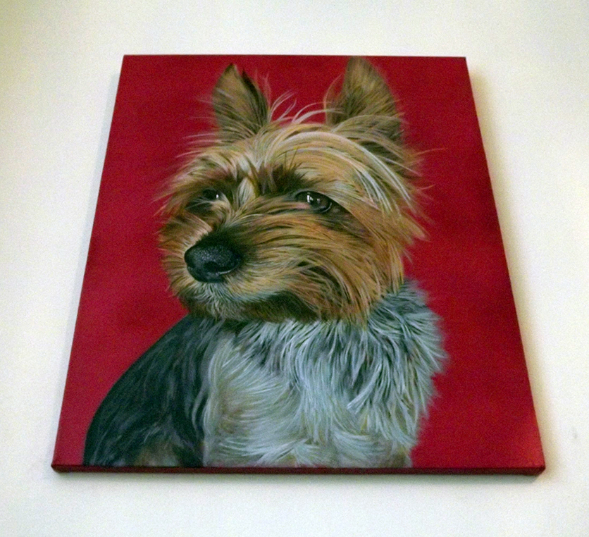 Ian Salmon YorkshireTerrier Dog portrait 2.jpg