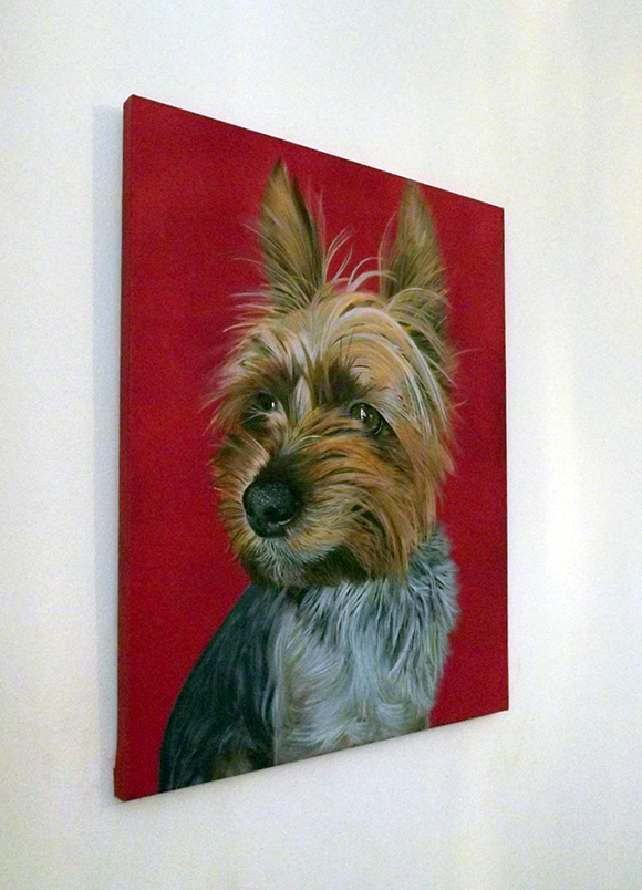 Ian Salmon YorkshireTerrier Dog portrait 3.jpg