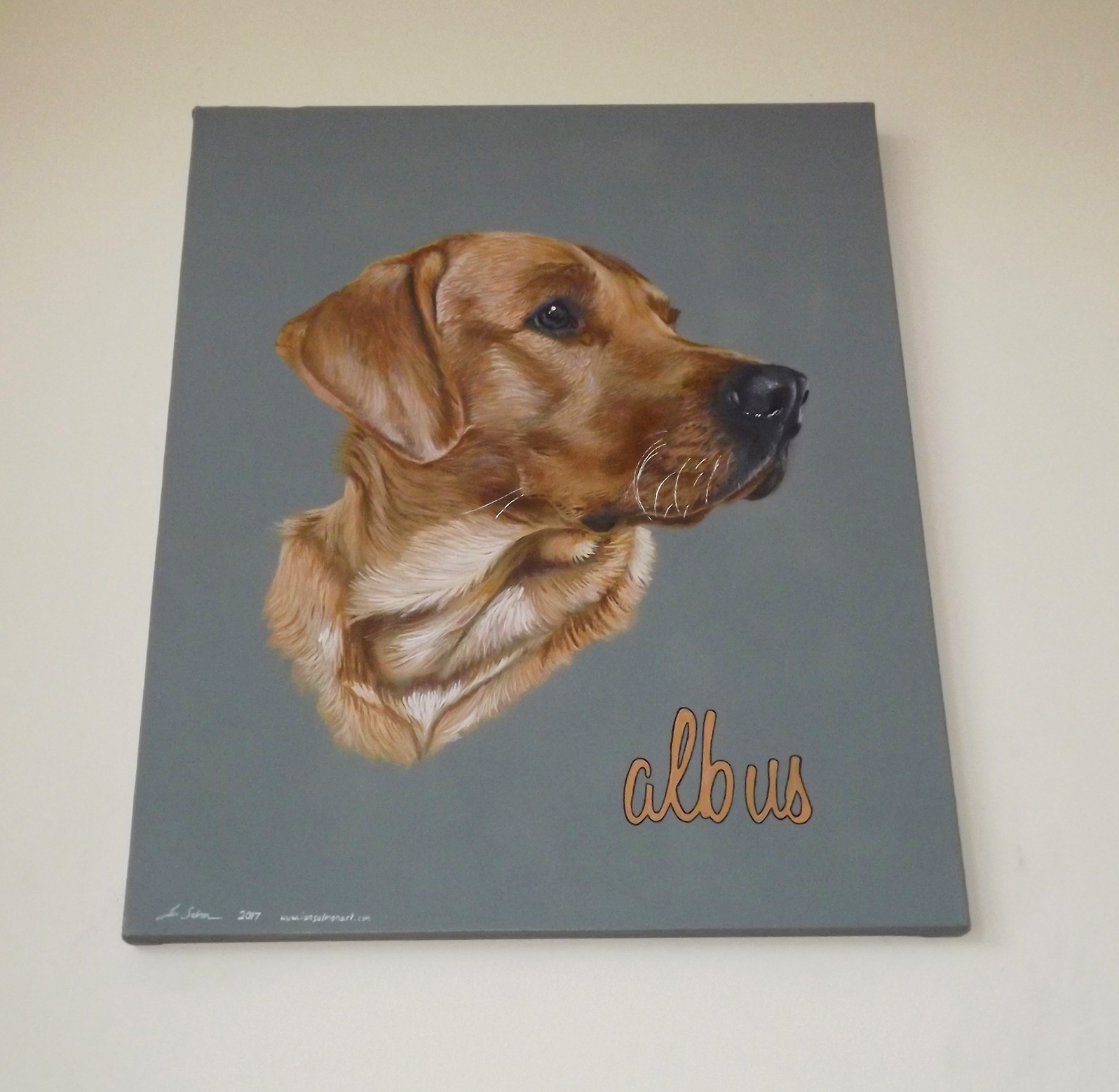 Ian Salmon Albus Labrador Dog portrait 2.jpg