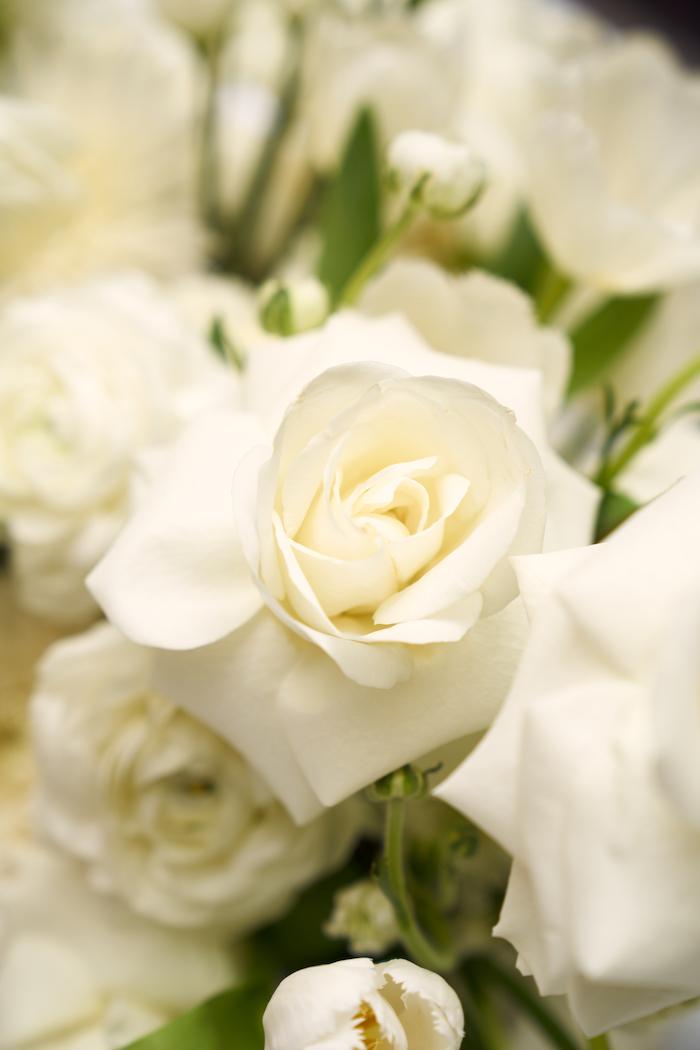 White Elegance-1.jpg