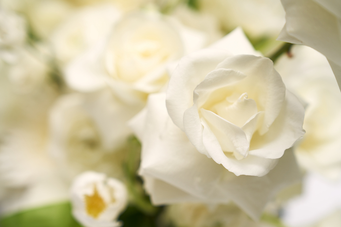 White Elegance-3.jpg