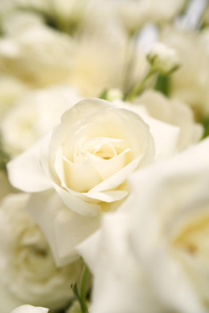 White Elegance-4.jpg