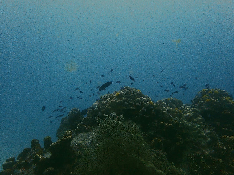 Diving Koh Tao.