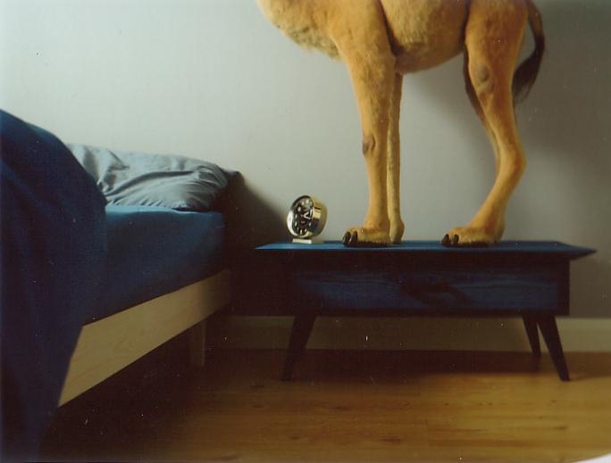Camel & Bed.jpg