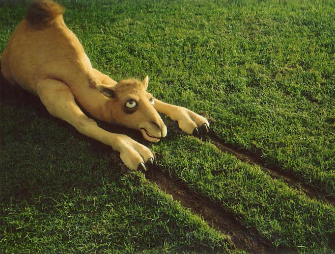 Camel & Grass.jpg