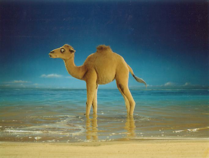 Camel & Sea.jpg