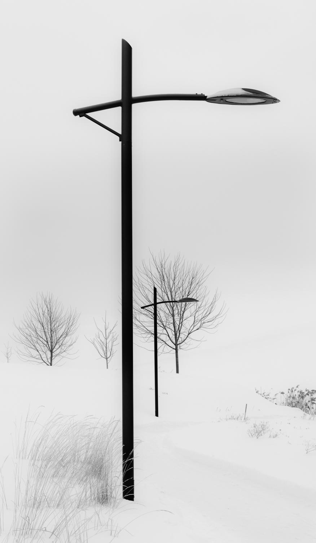 TreeSome.jpg