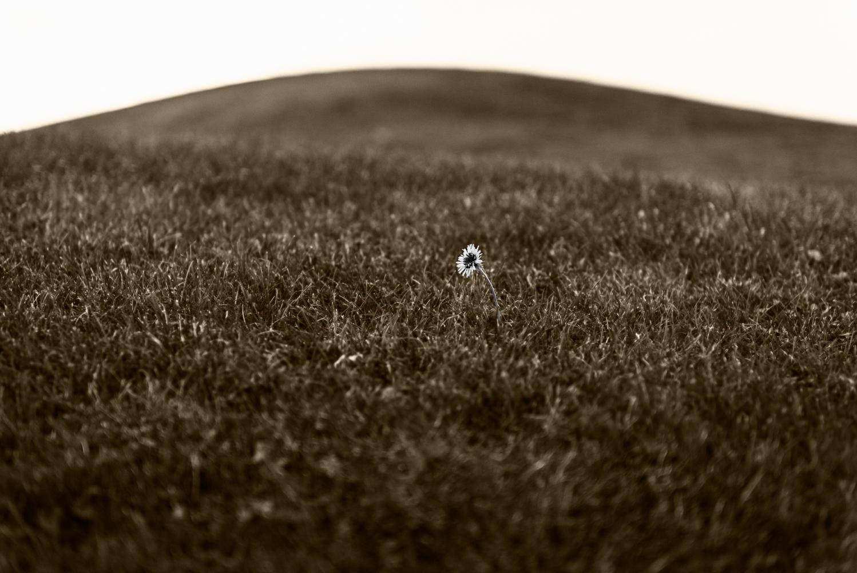 Lonely star.jpg