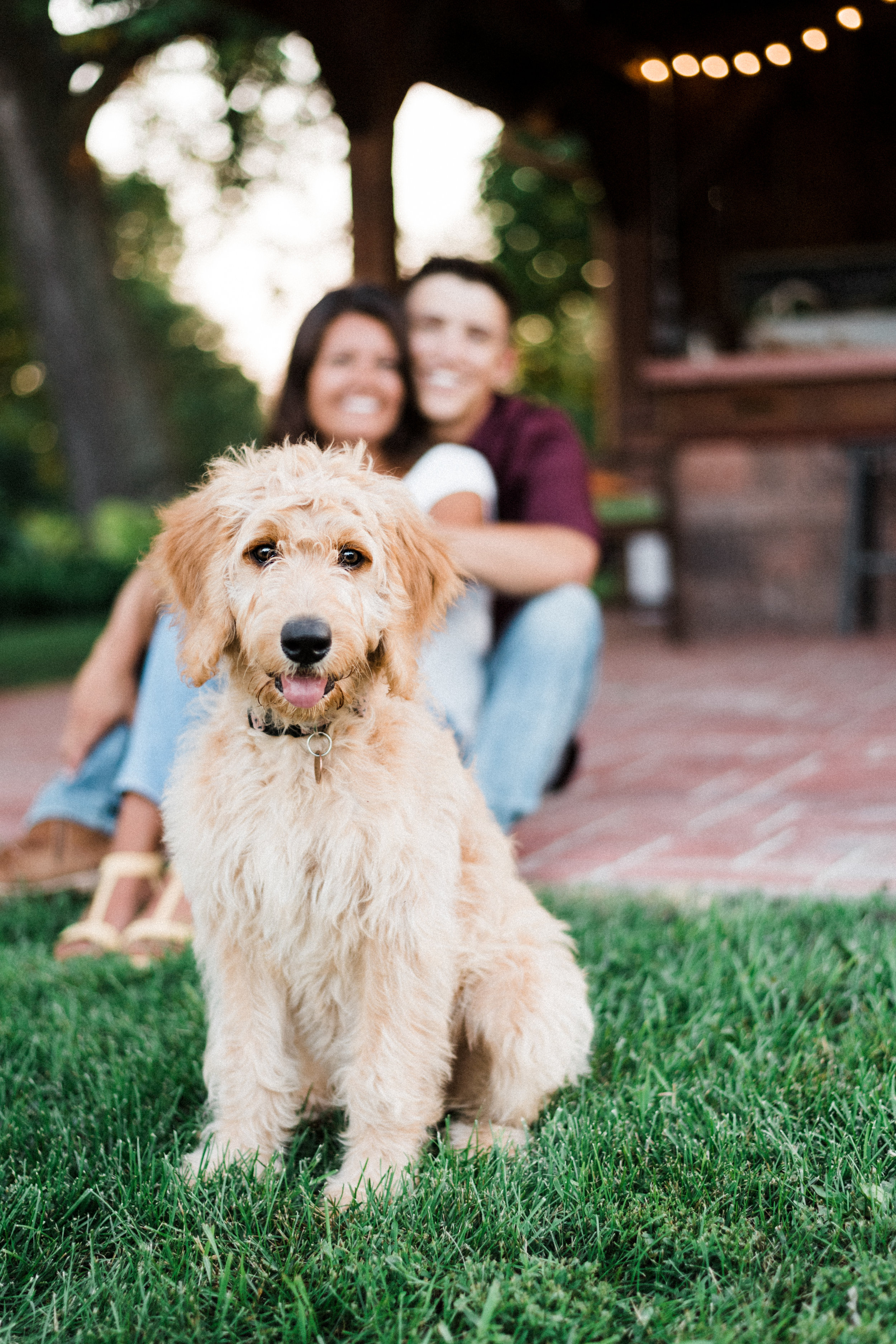 Engaged couple watches their Goldendoodle as she poses for the camera.