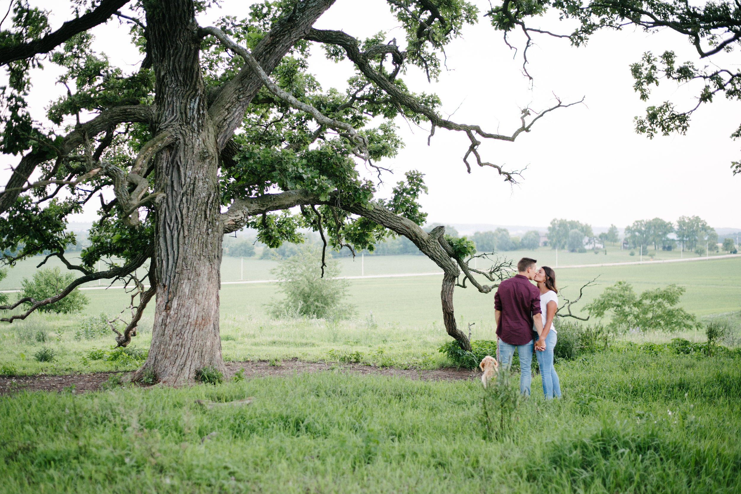 Engaged couple walks their Goldendoodle and kisses in front of a large tree.