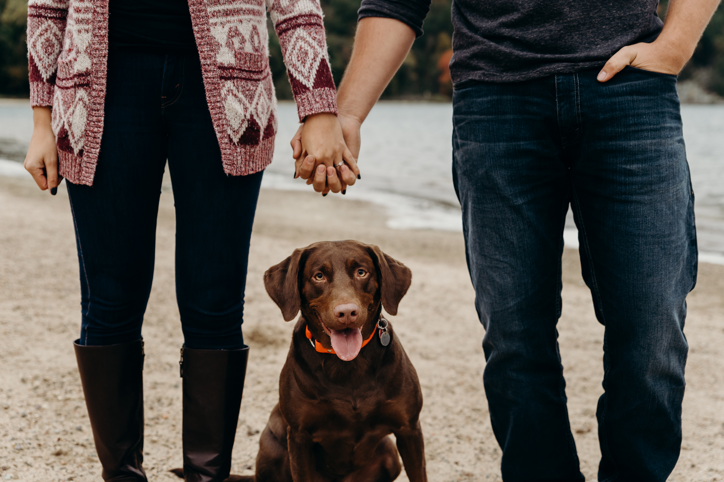 Engaged couple holds hands with their chocolate lab dog sitting in between them.