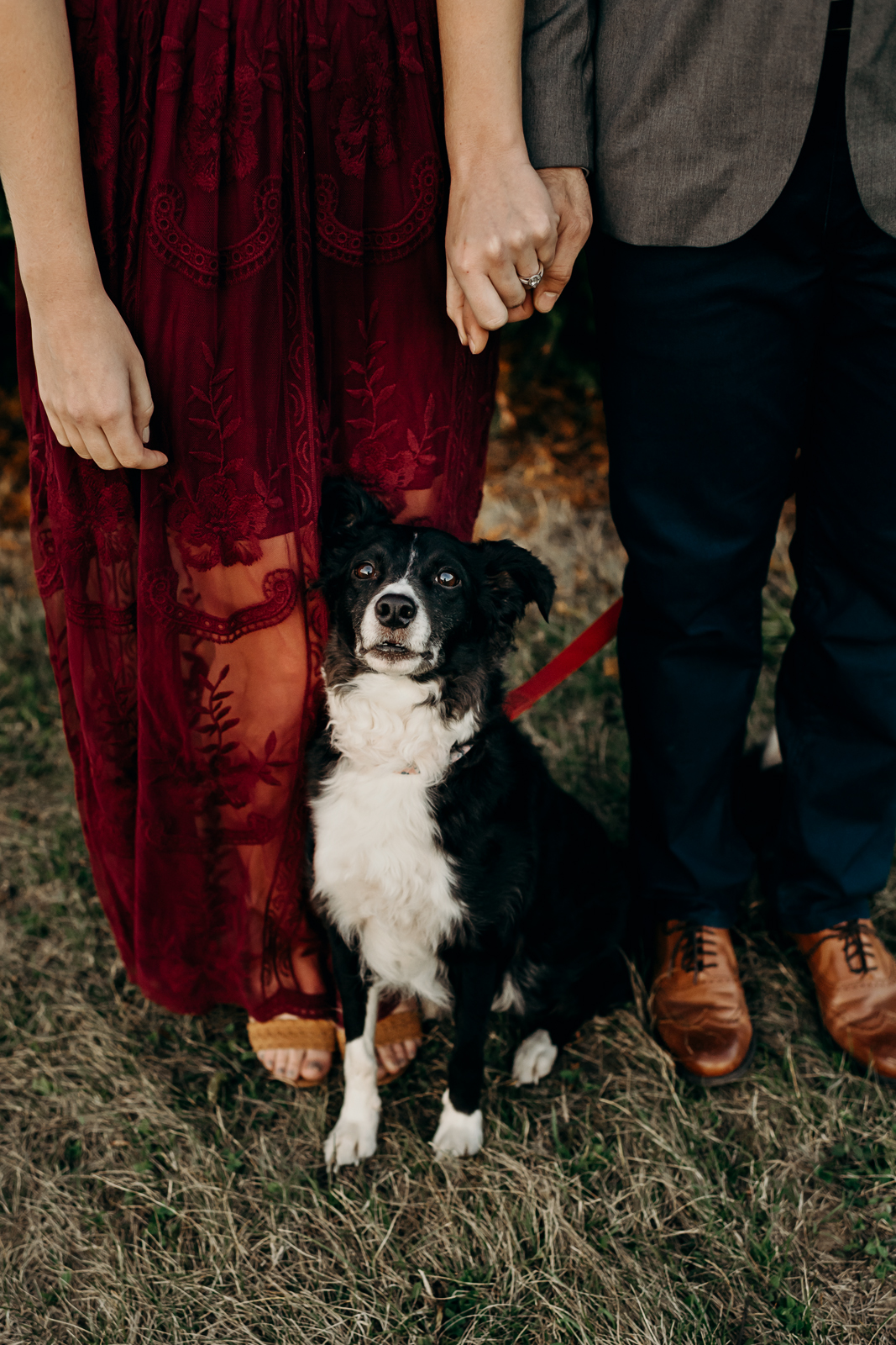 Engaged couple holds hands with their dog sitting nicely in between them.