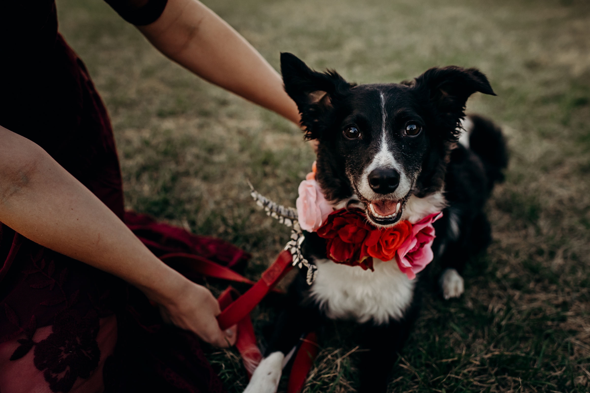 Dog wears red and pink flower crown around her neck.