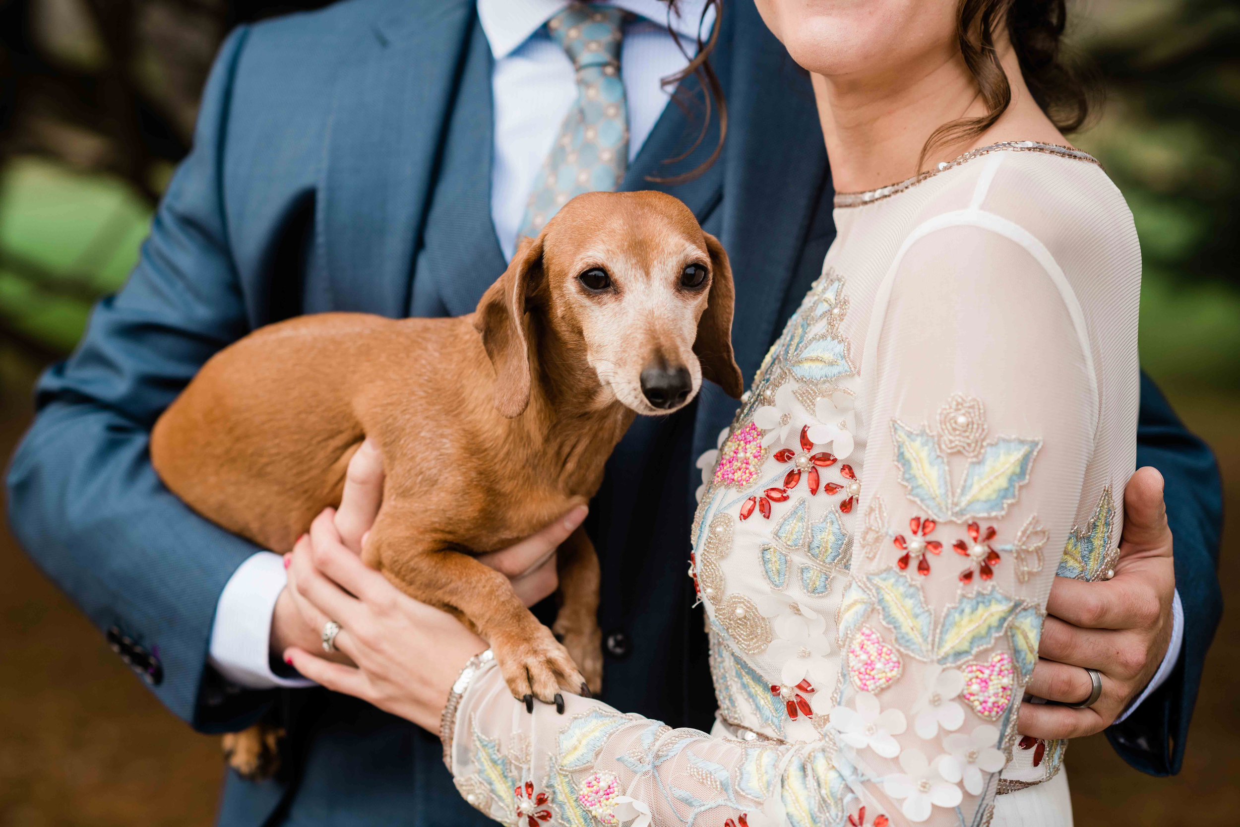 Dachshund held by bride and groom