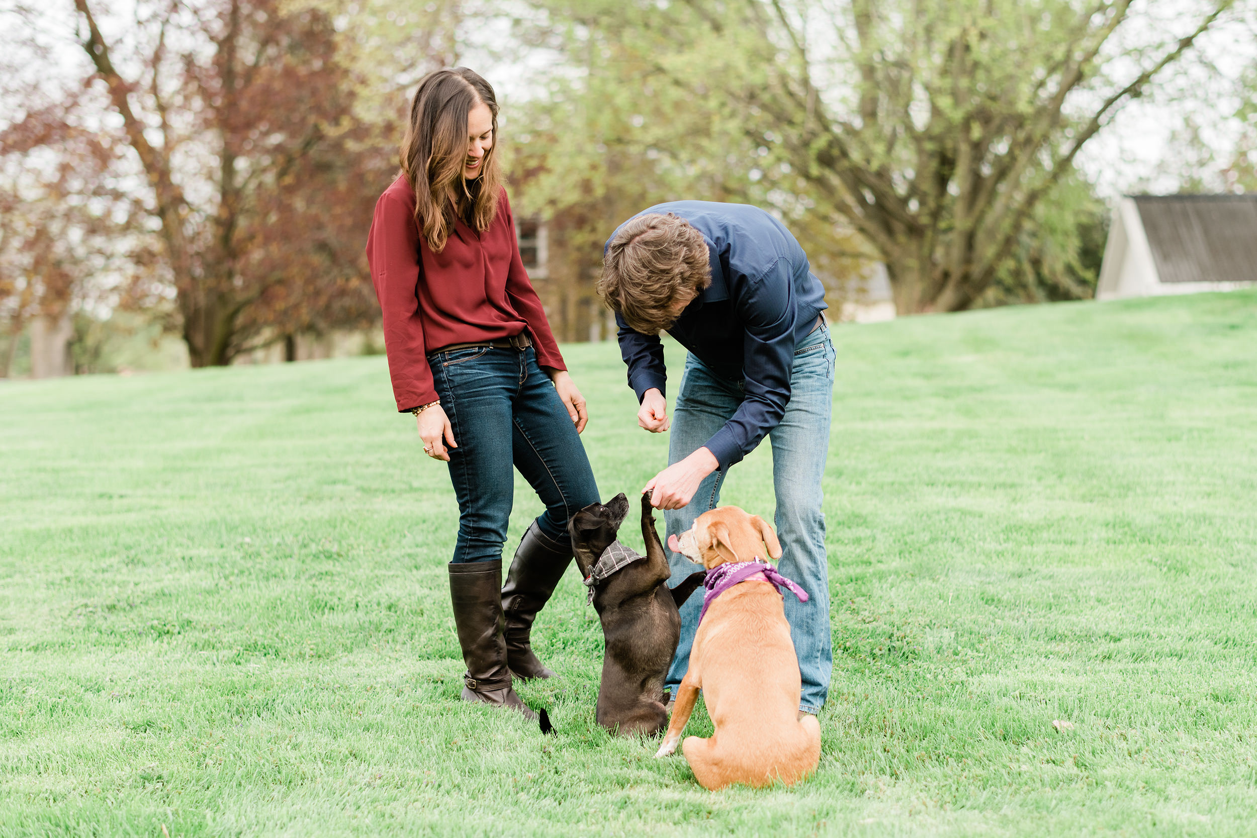 Engaged couple teaching their dogs tricks