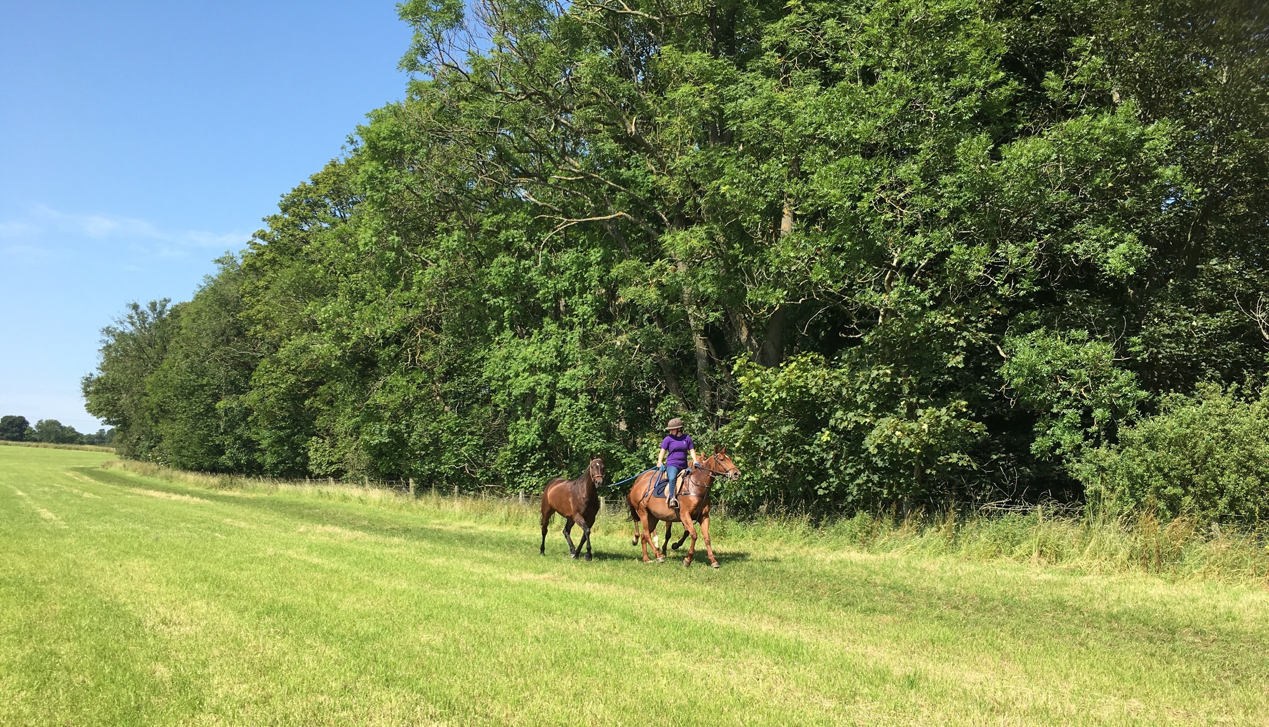 One mile gallop to keep horses fit