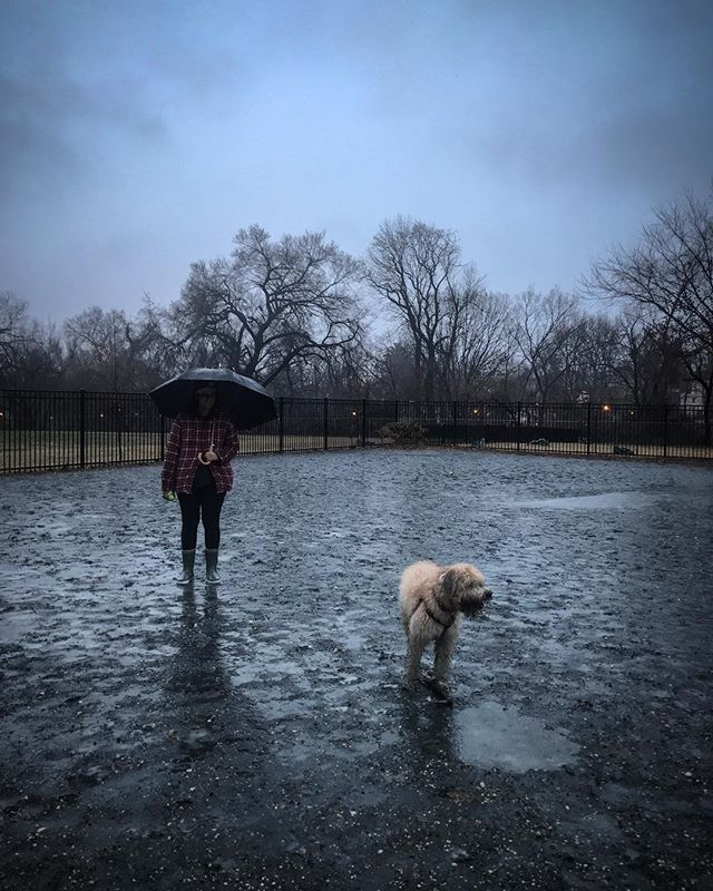 Rosie and Wednesday. #wednesdayonsaturday #dogsitting