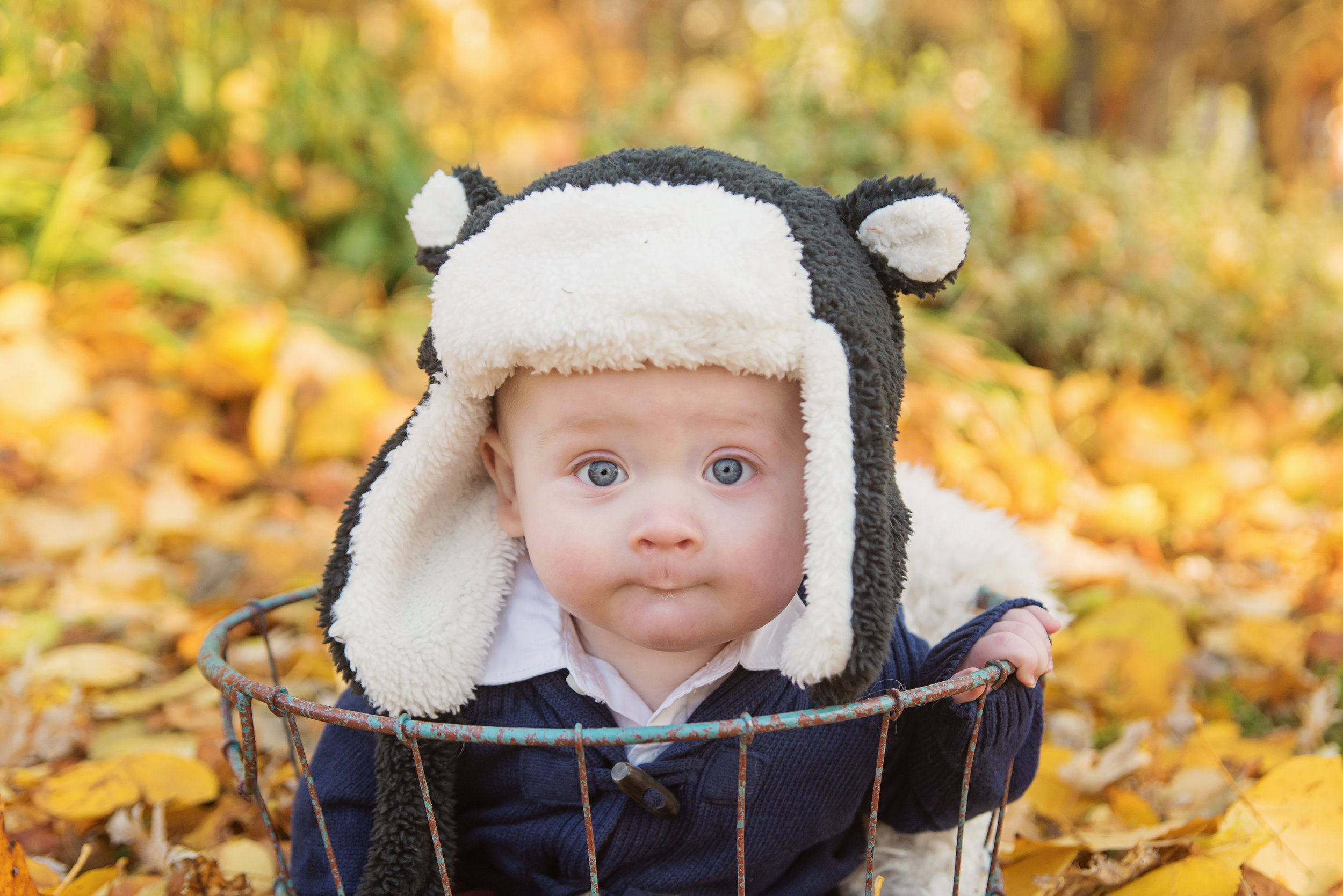 st-louis-fall-mini-sessions-2018-family-photographer-baby-in-basket-in-fall-leaves-with-winter-bear-hat.jpg