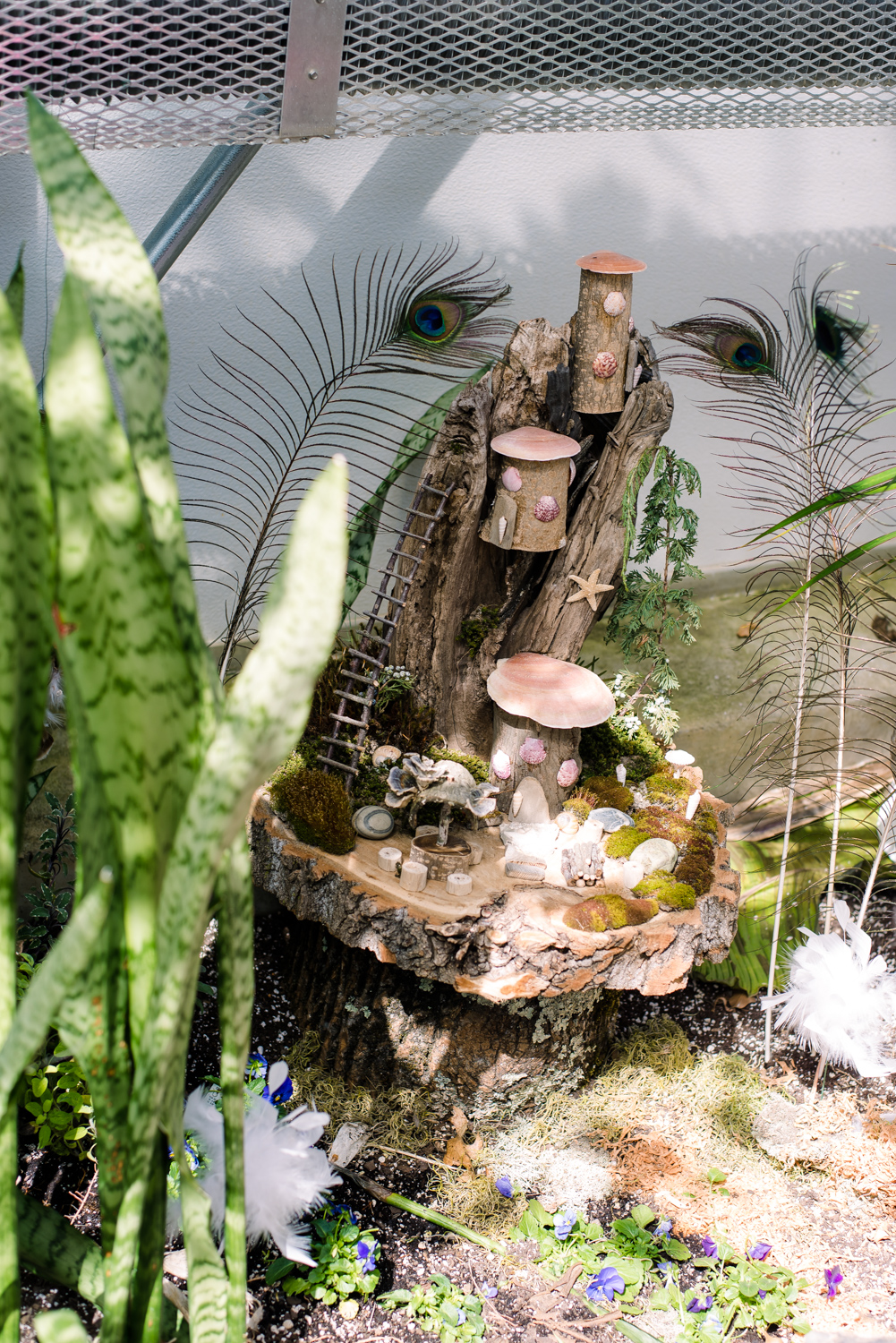 Fairy Houses at Roger Williams Botanical Garden (2 of 1).JPG