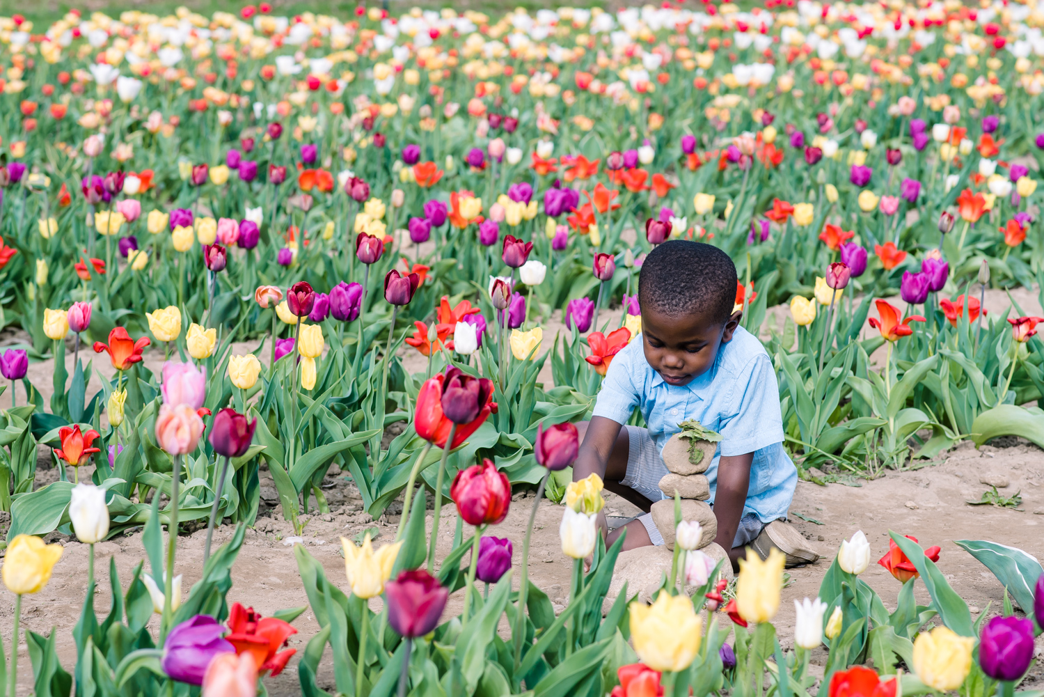 Little Boy at Wicked Tulip Farm Seraphine Photography (8 of 1).JPG