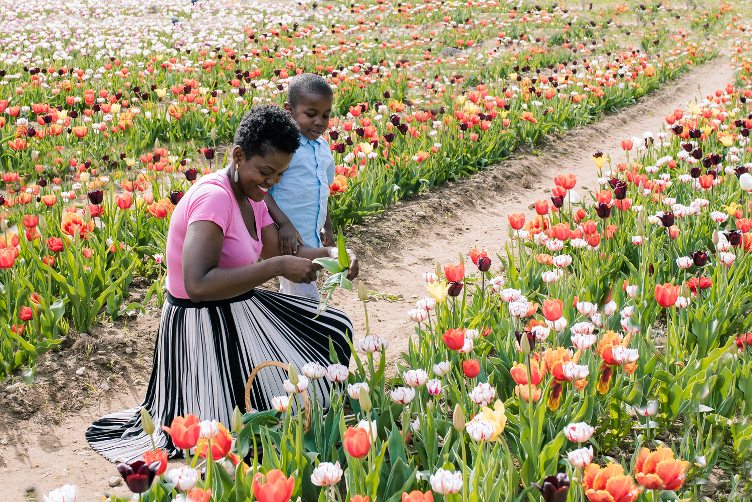 Mother and Son Picking Tulips (1 of 1).JPG