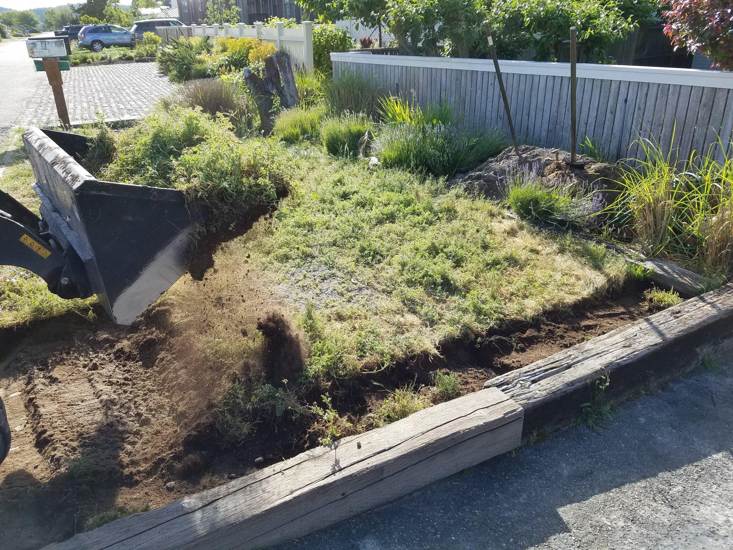 Lawn Removal.jpg
