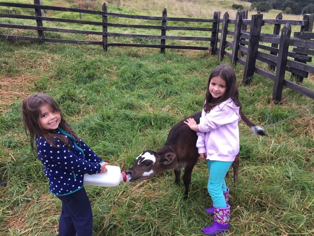 Laura y Elisa taking good care of a little calf! 💚