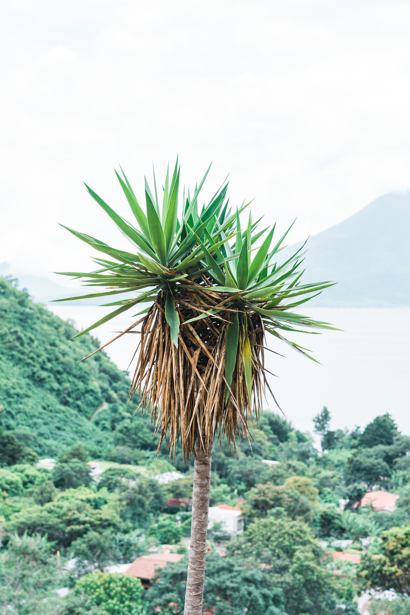 Palm Trees at Adobe Airbnb in Jaibalito at lake atitlan