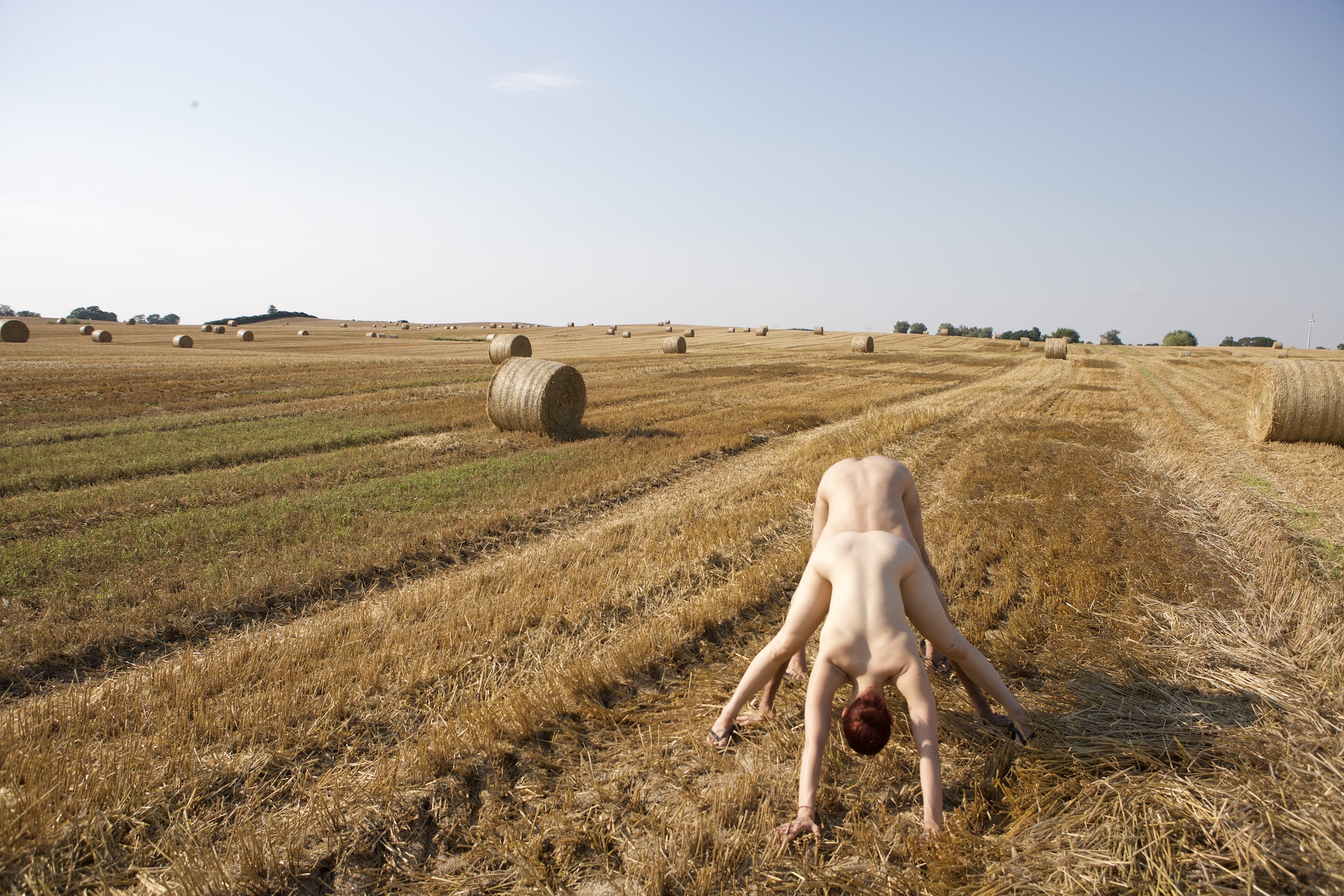 Nested downward-dogs, Scaroni in front of Curtis, in a golden field dotted with cylindrical hay bales. (photo: Sven Hagolani)