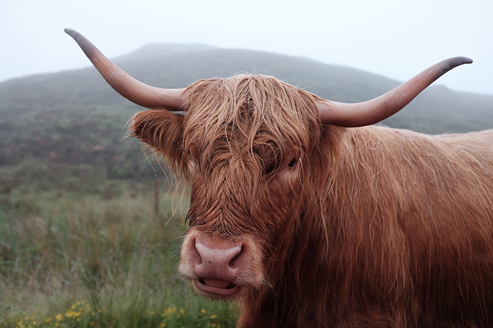 Things to see in Perthshire, Scotland