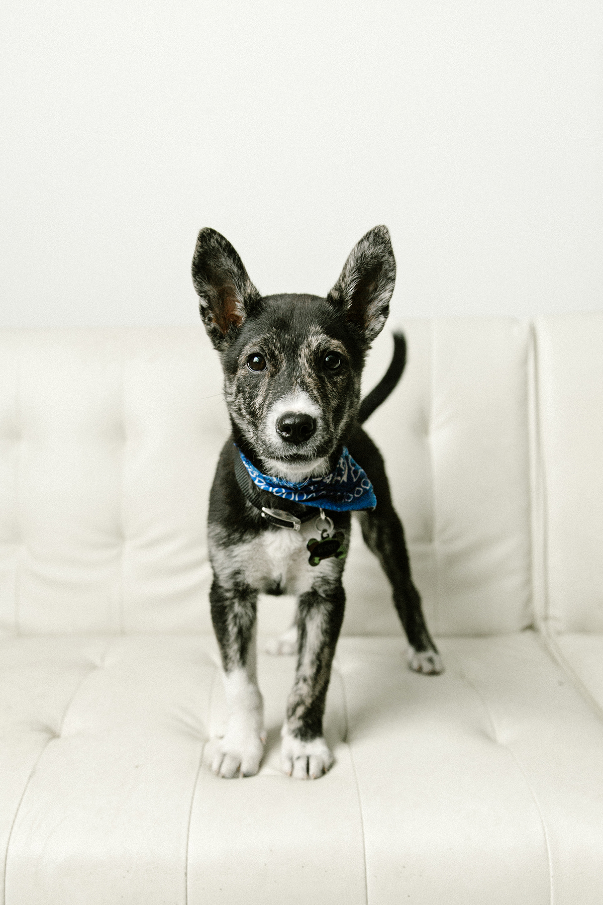 09072019-Dogs-056.jpg