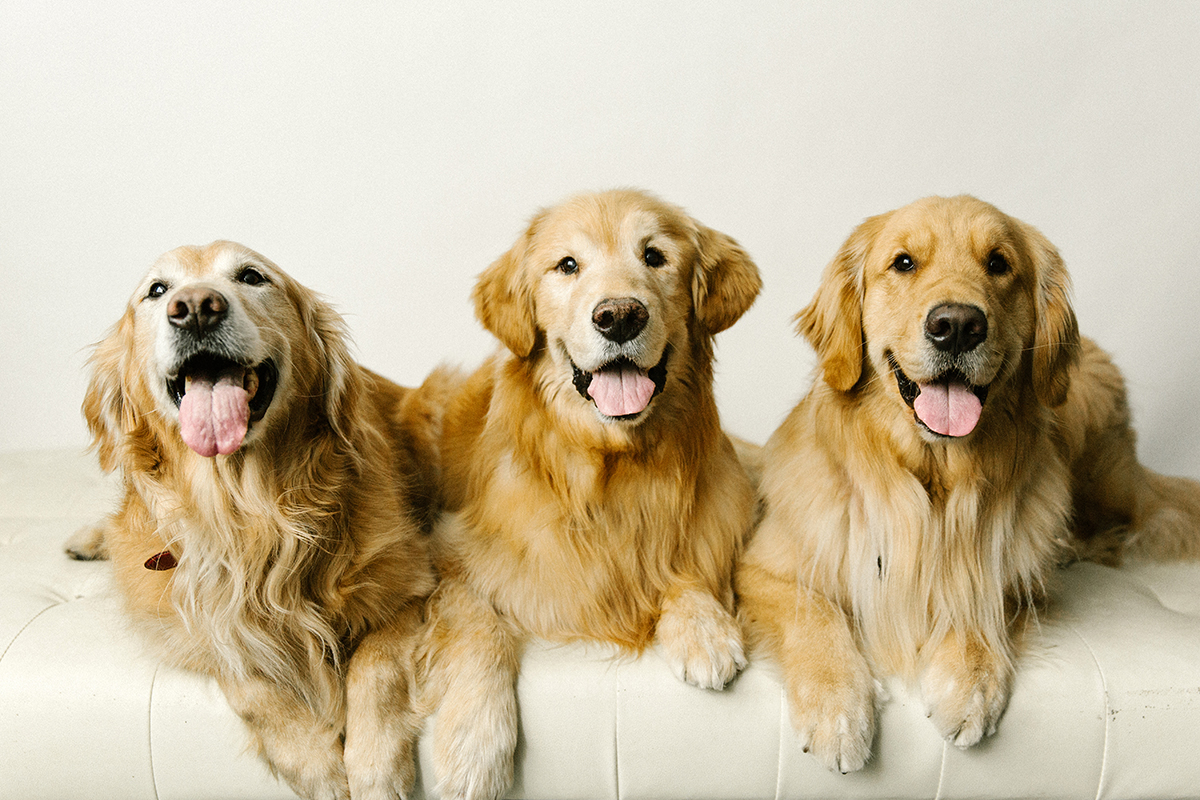 09072019-Dogs-059.jpg