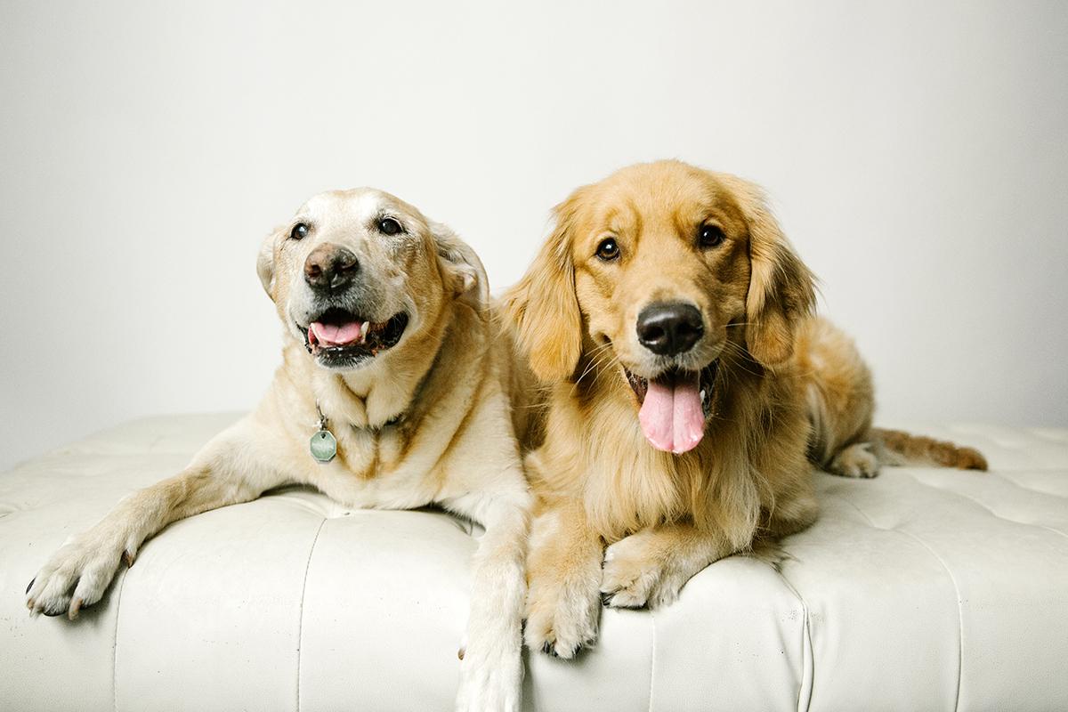 09072019-Dogs-065.jpg
