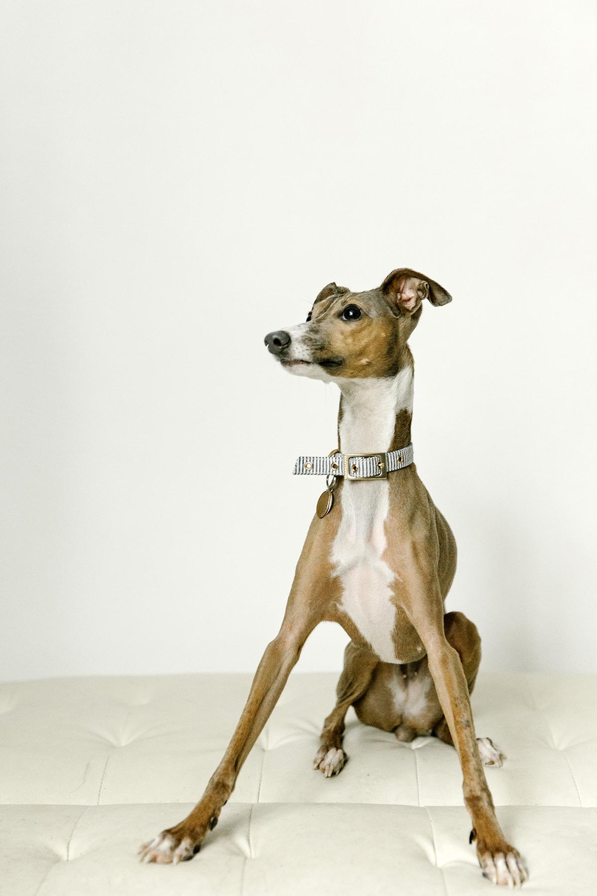 09072019-Dogs-064.jpg