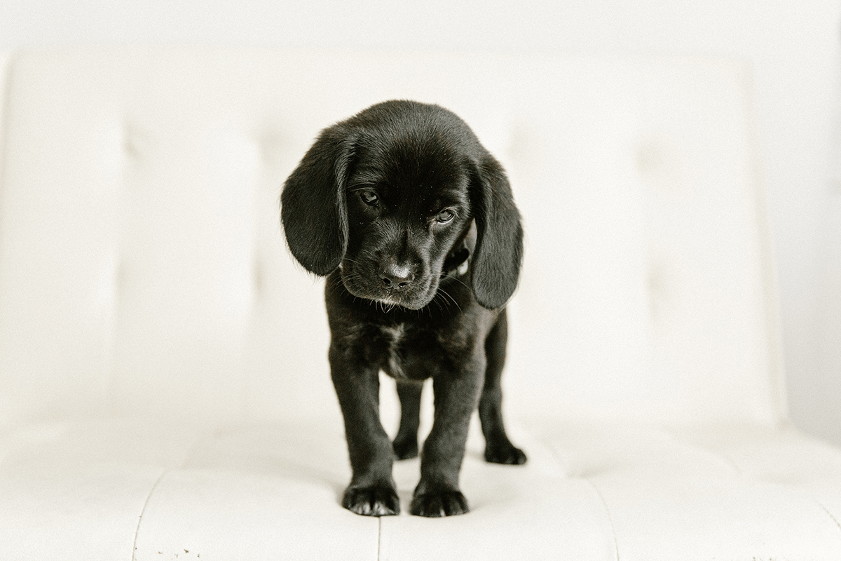 09072019-Dogs-006.jpg