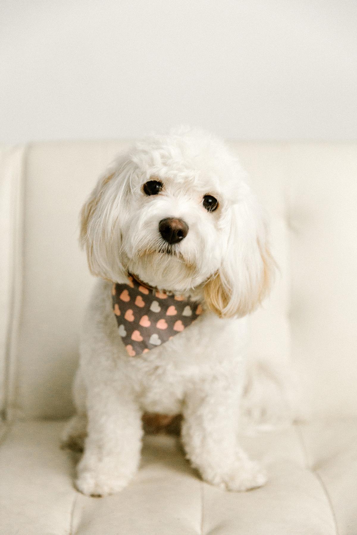 09072019-Dogs-031.jpg
