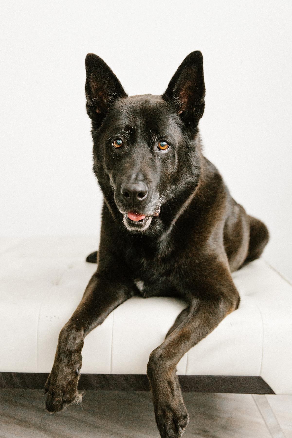 09072019-Dogs-036.jpg