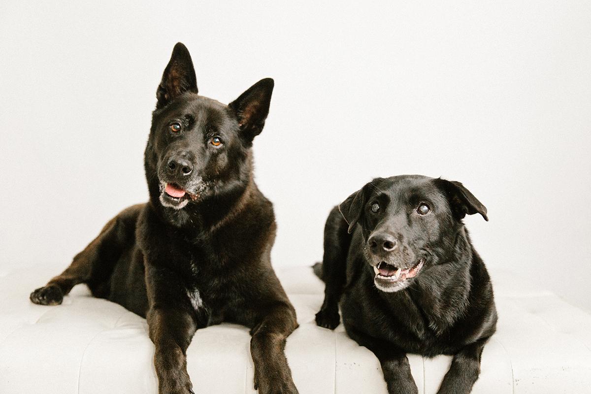 09072019-Dogs-038.jpg