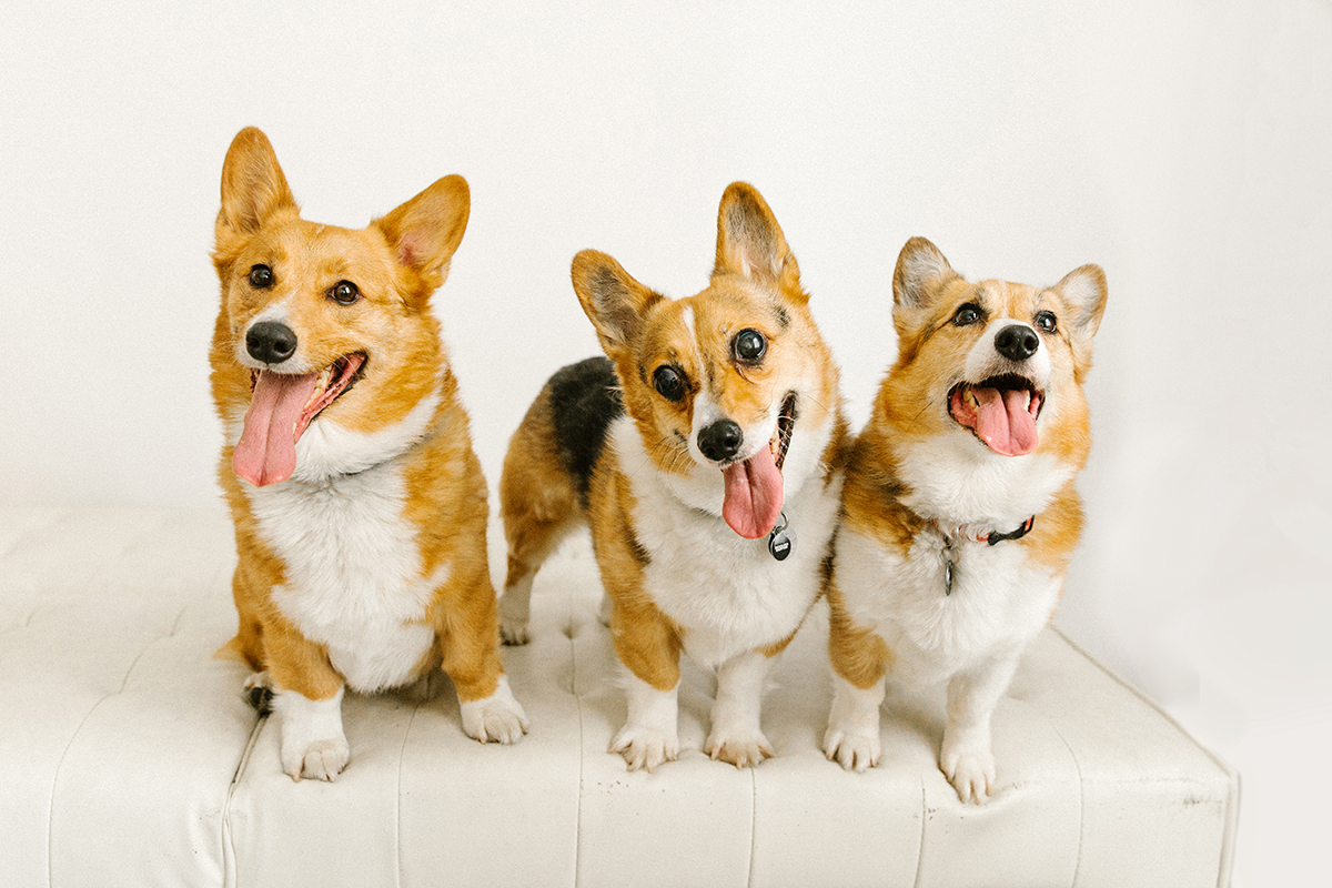 09072019-Dogs-043.jpg
