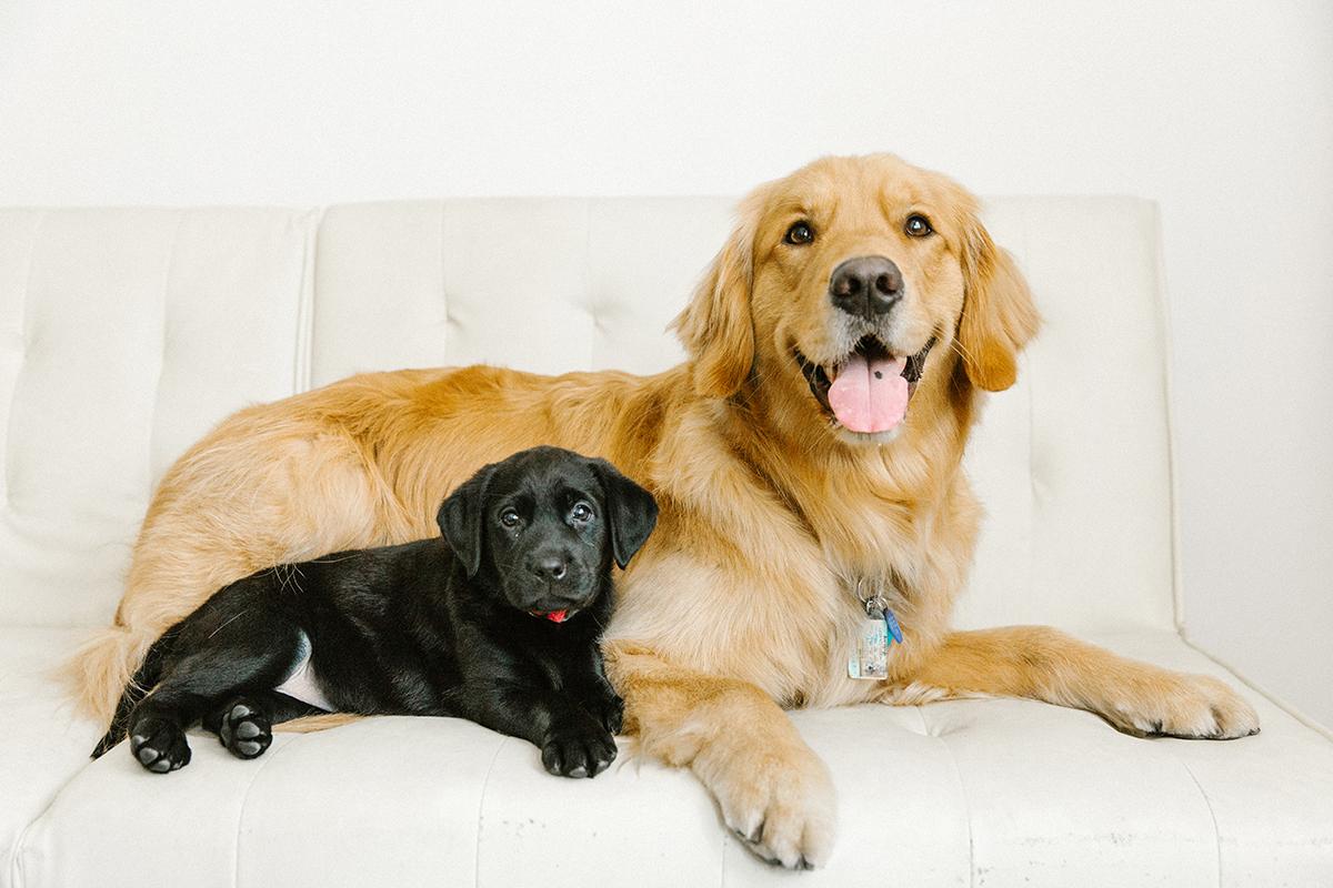 09072019-Dogs-051.jpg