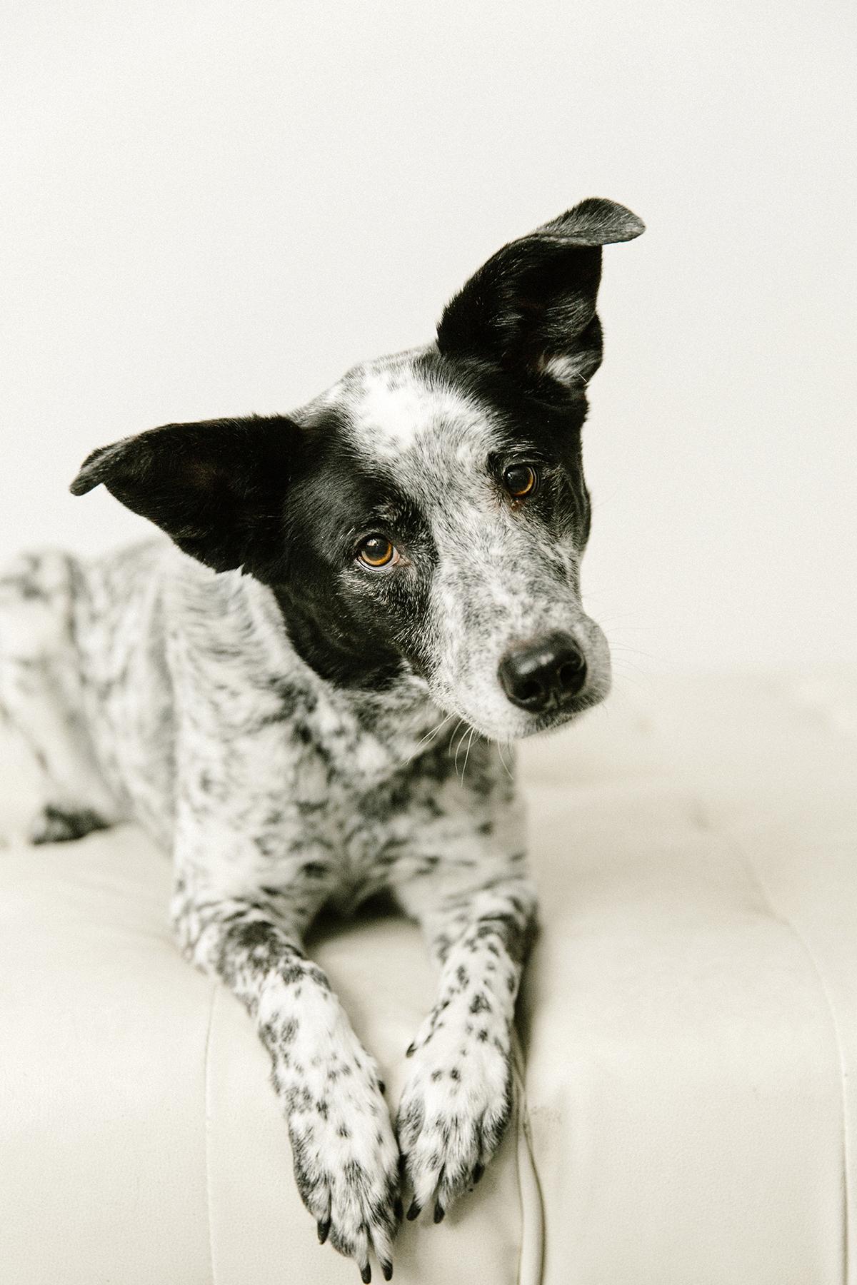 09072019-Dogs-061.jpg