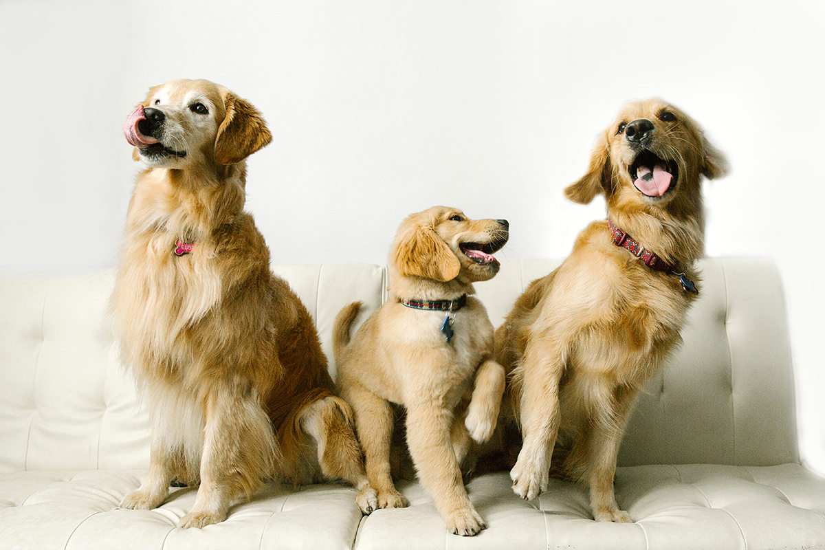 09072019-Dogs-067.jpg