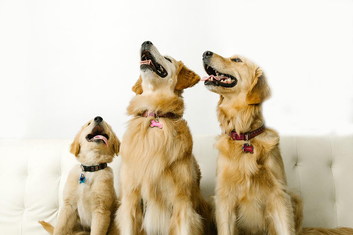 09072019-Dogs-068.jpg