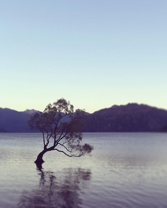The calm before the storm. Ready to embark on the 250km @racingtheplanet ultramarathon in #Wanaka #newzealand. 3 of us are raising funds and awareness for New Zealand Search & Rescue #aotearoa #wanakatree #landsar #morethanarace #racingtheplanet #searchandrescue #rescue #mountain #lake #ultramarathon #run #trailrunning